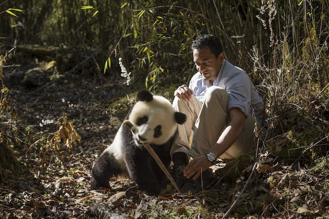 M Sanjayan With a Giant Panda Cub in China