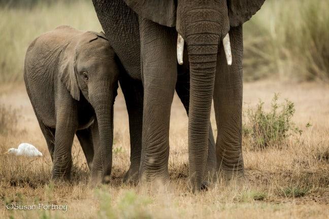 Baby & Mama Elephant