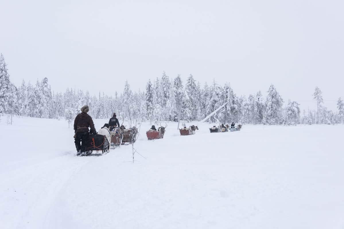 Reindeer sleigh in Finnish Lapland
