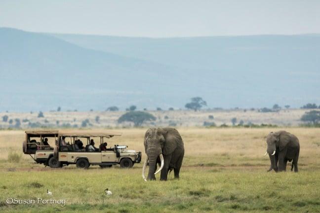 Big Tusker Bull Elephant