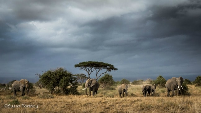 Herd of Elephants after the Rain