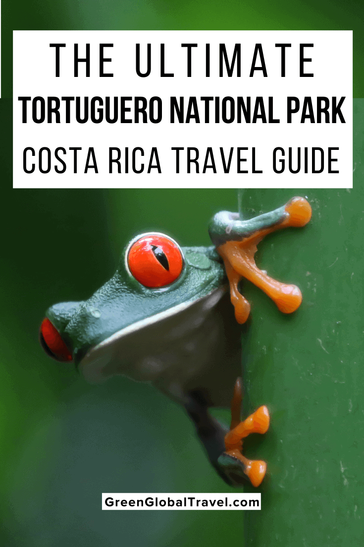 The Ultimate Tortuguero National Park, Costa Rica Travel Guide including how to get from San Jose to Tortuguero, the Best Tortuguero Hotels, Tortuguero National Park Tours & more! | how to get to tortuguero | tortuguero tours | tortuguero turtle season | weather in tortuguero costa rica | tortuguero wildlife | hotel tortuguero | tortuguero costa rica hotels | hotels in tortuguero costa rica | tortuguero canals | tortuguero map | tortuga lodge costa rica | tortuguero costa rica
