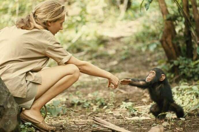 Jane Goodall Interview