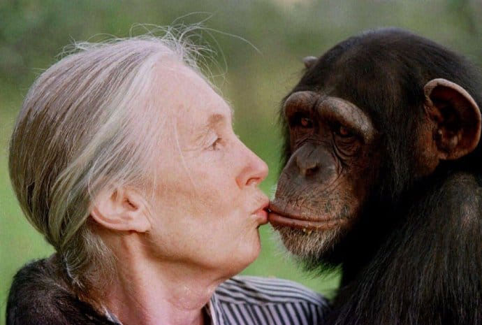 15 Female Heroes who are Animal Rights Activists- Jane Goodall