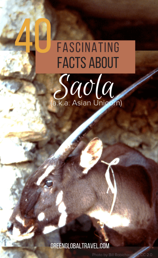 40 Fascinating Facts About the Saola