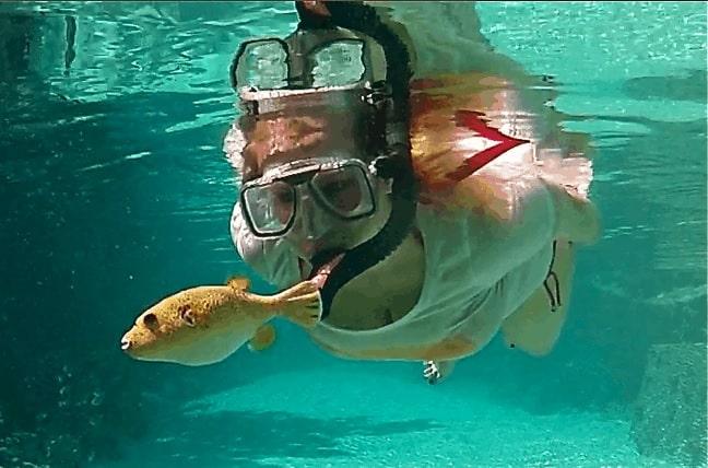 Snorkeling Bora Bora, Yellow Pufferfish
