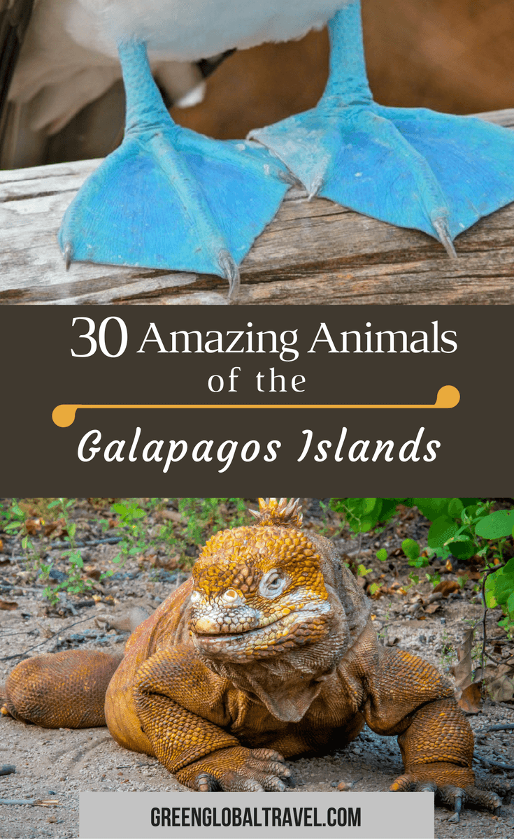 30 Amazing Animals of the Galapagos Islands via @greenglobaltrvl