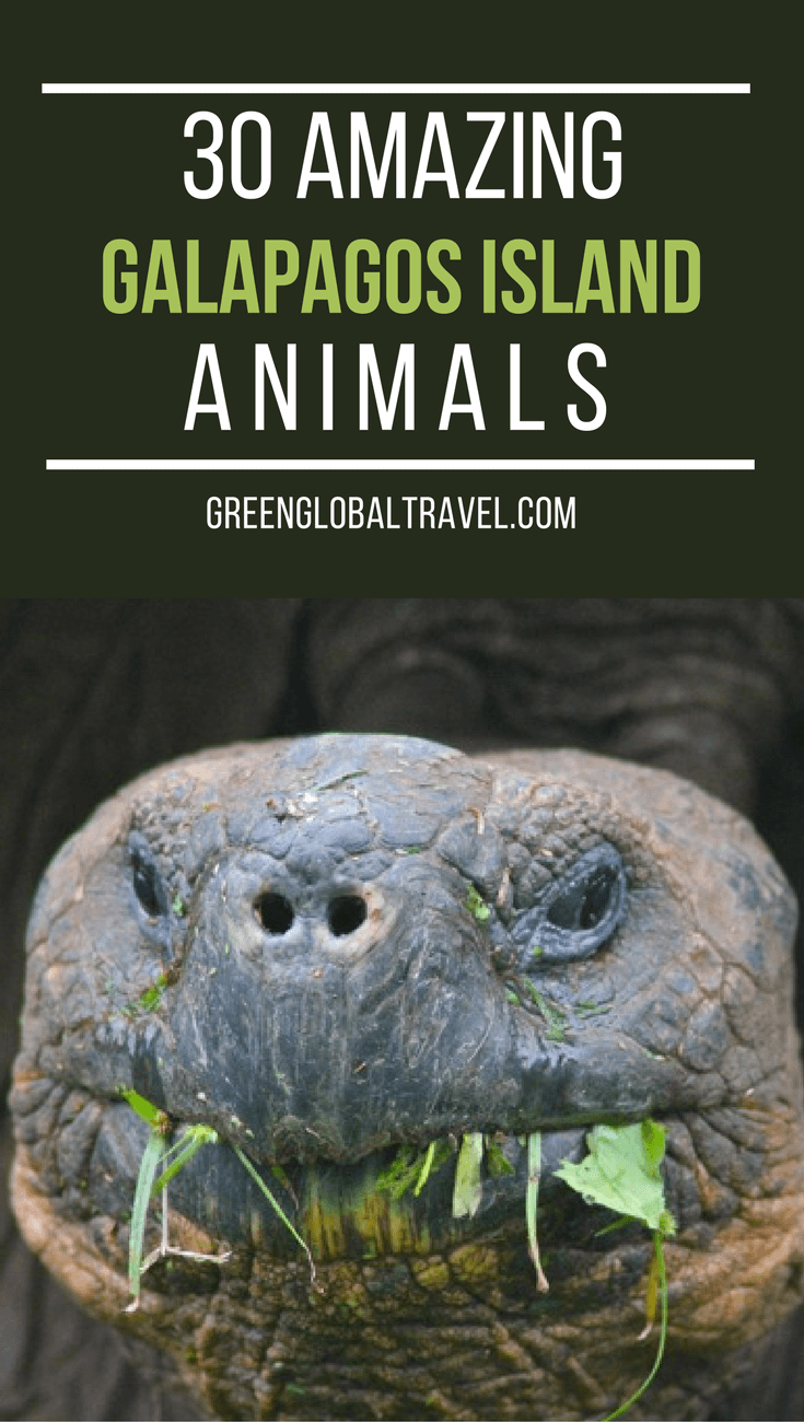 30 Amazing Galapagos Island Animals via @greenglobaltrvl