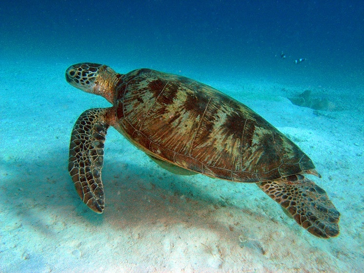 Scuba Diving With Sea Turtles in Coron, Palawan