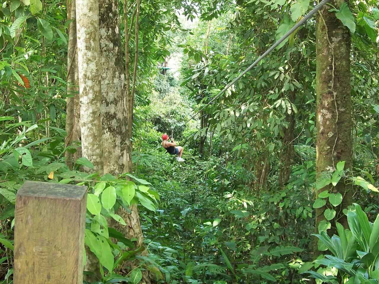 Things to Do in Jamaica -Zipline
