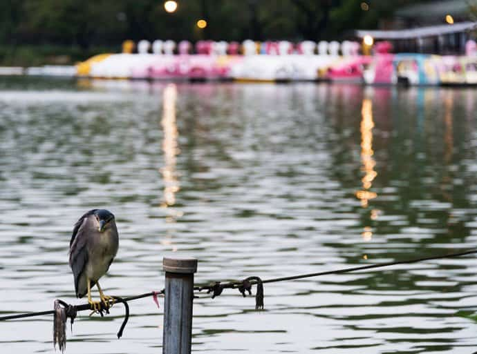 Japan Photos: Tokyo's Ueno Park