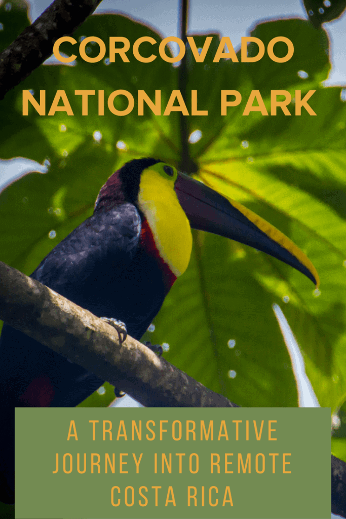 Toucan in Corcovado National Park, Costa Rica