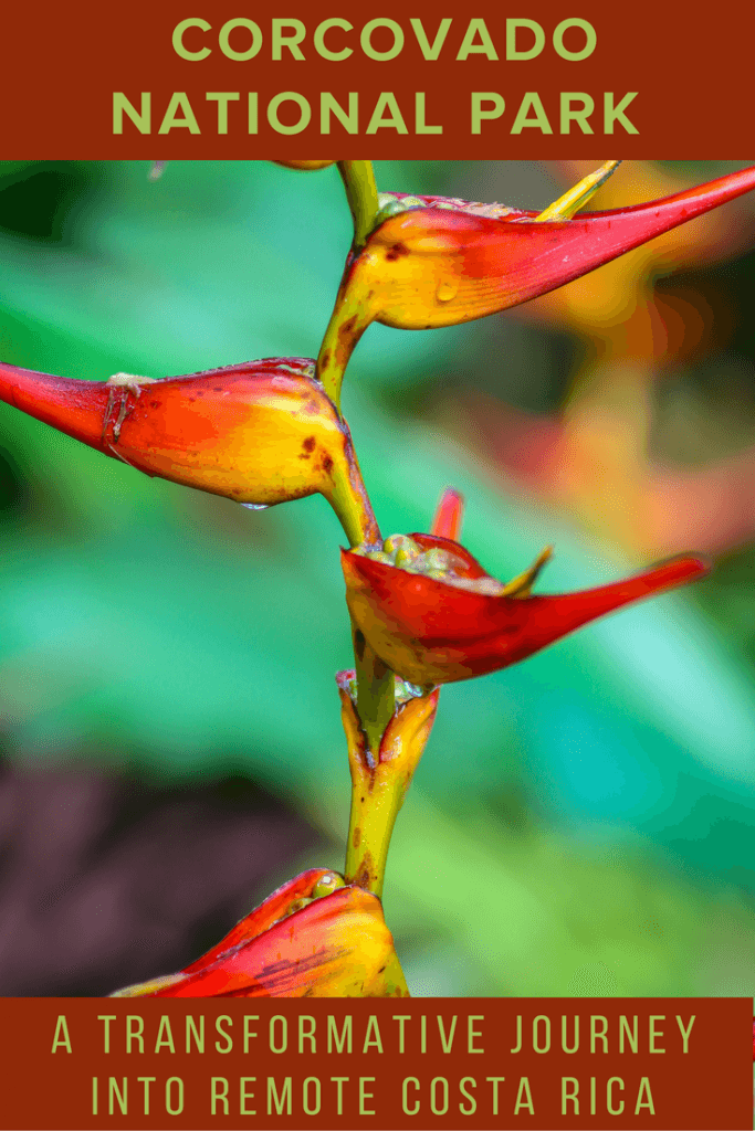 Heliconia in Corcovado National Park, Costa Rica