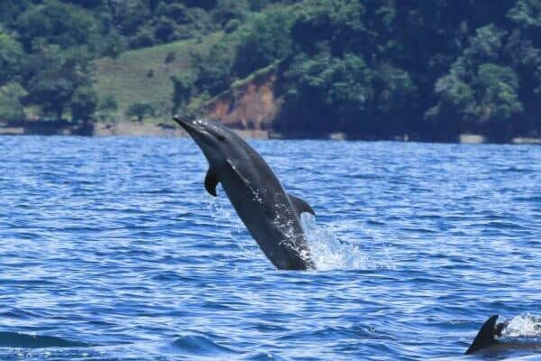 Protecting Whales & Dolphins in Golfo Dulce, Costa Rica