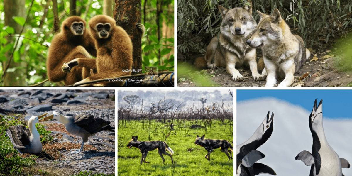 5 endangered species that mate for life