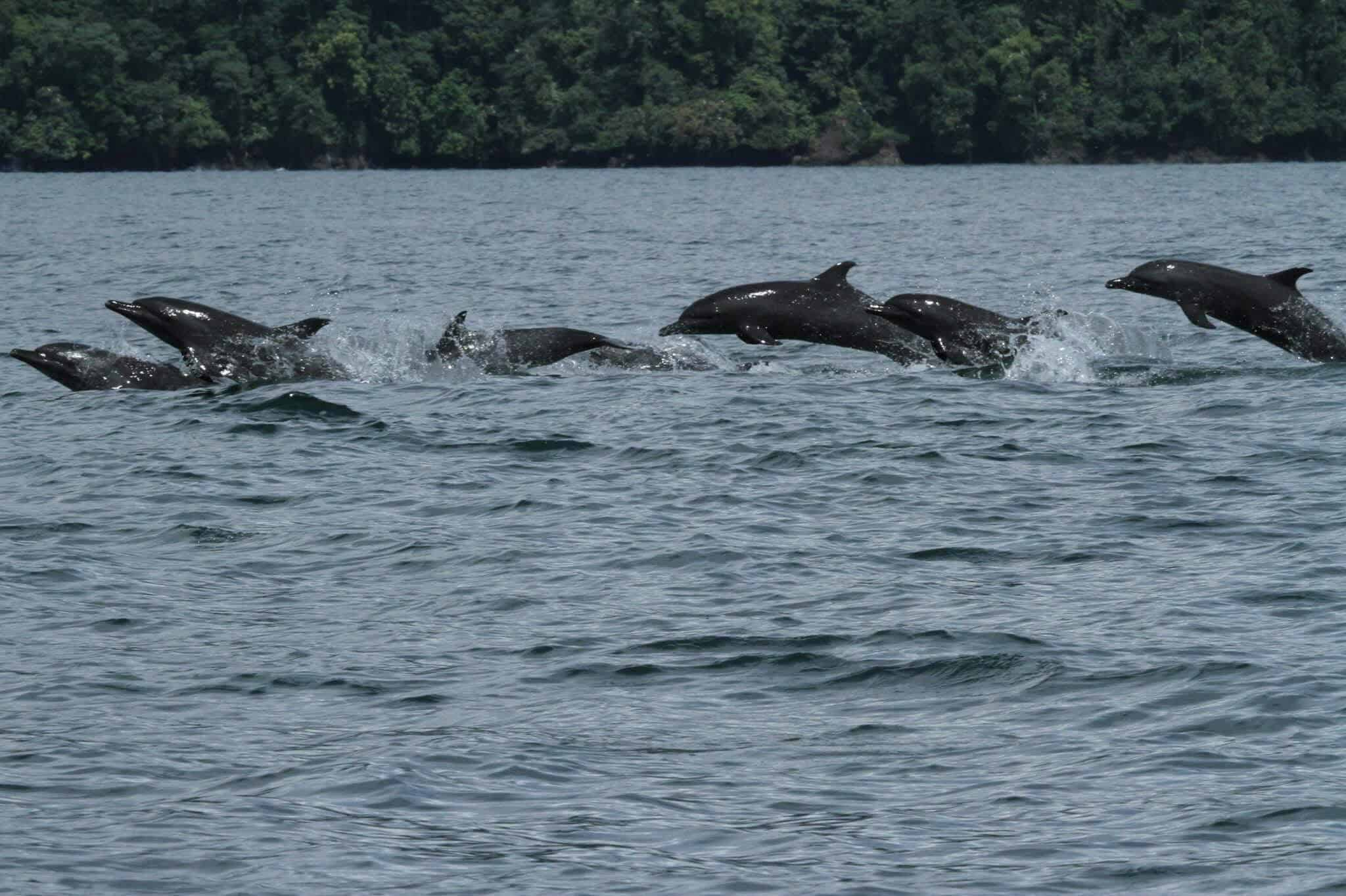 Pod of Wild Dolphins