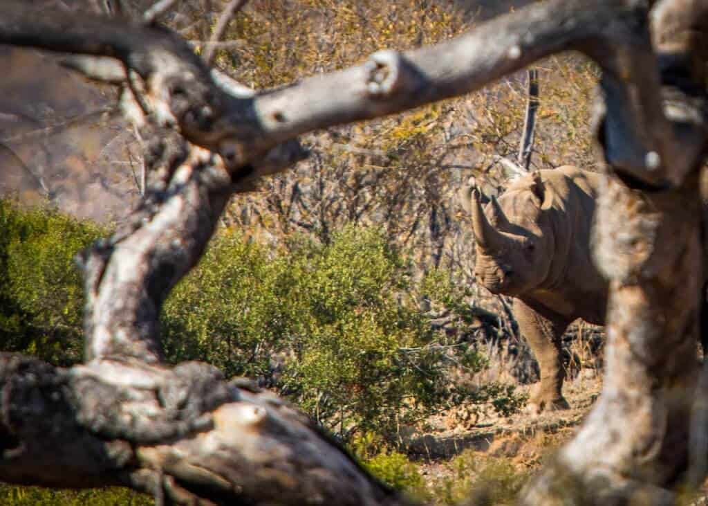 Black Rhino in South Africa via @greenglobaltrvl