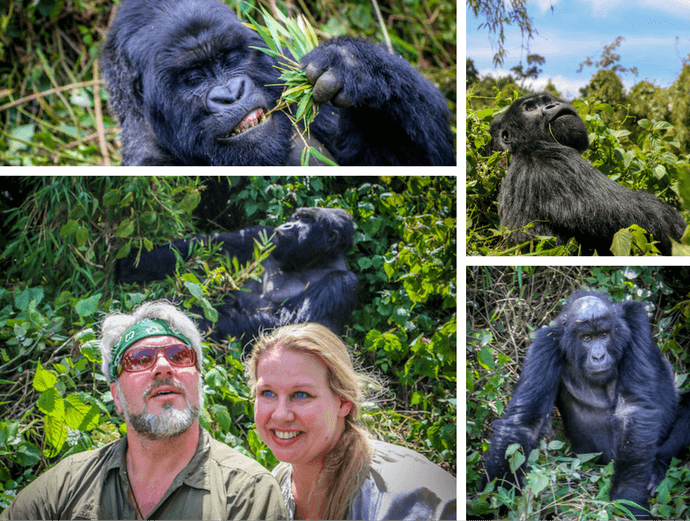Mountain Gorillas of Rwanda Collage