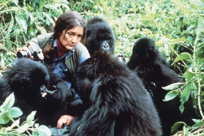 15 Female Heroines that are Famous Animal Rights Activists- Dian Fossey
