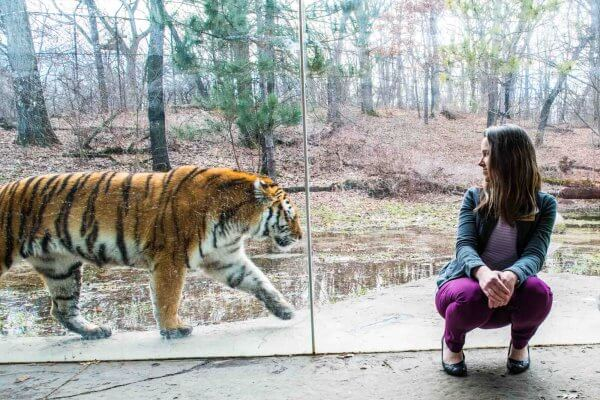 Minnesota Zoo Conservation: How Zoos Help Endangered Species