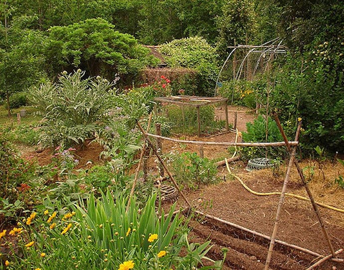 A Permaculture Garden