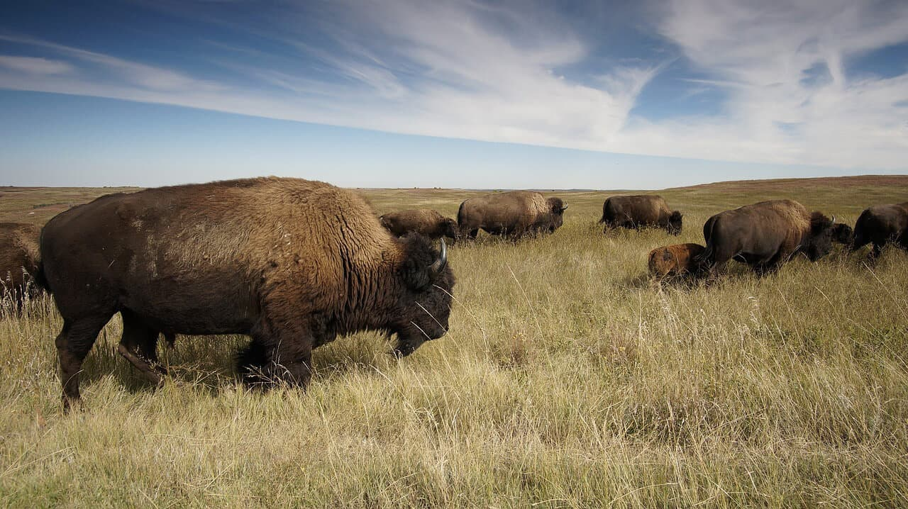 Best National Parks In USA For Wildlife Watching via @greenglobaltrvl
