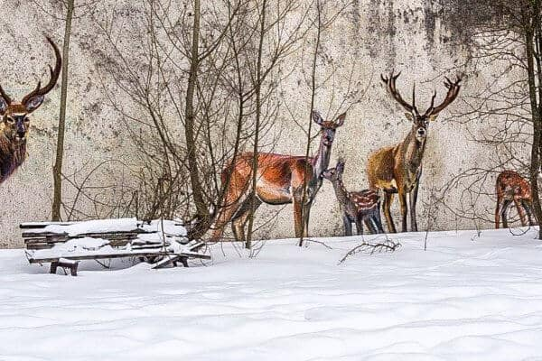 Chernobyl Today- Deer Graffiti