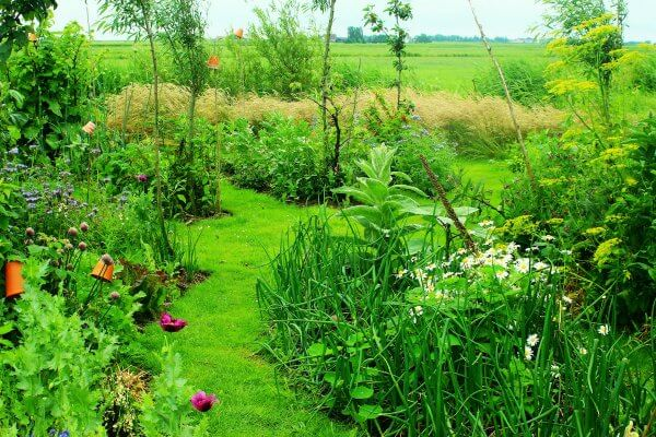 What Is Permaculture Gardening? An Intro to Permaculture Design and Principles