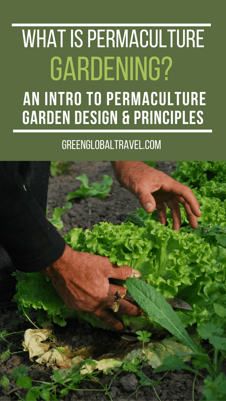 What Is Permaculture Gardening? An Intro to Permaculture Design & Principles. Includes the definition of permaculture, an explanation of its central concepts, and step-by-step instructions for making your own garden more fruitful and sustainable for long term benefits. via @greenglobaltrvl
