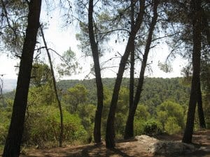 Travel to Jordan: Dibeen Forest Reserve