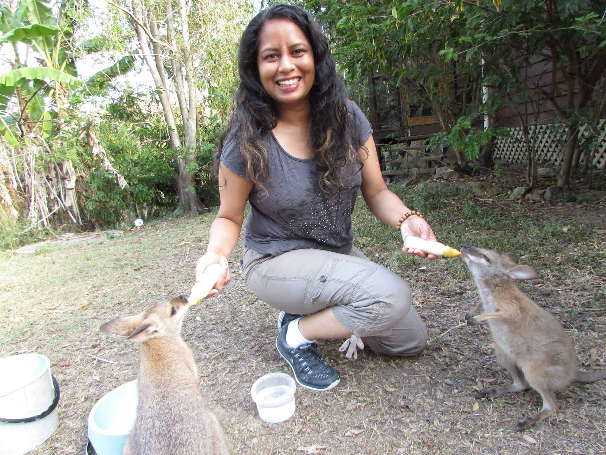 Volunteering at a Kangaroo Sanctuary - feeding baby wallabies