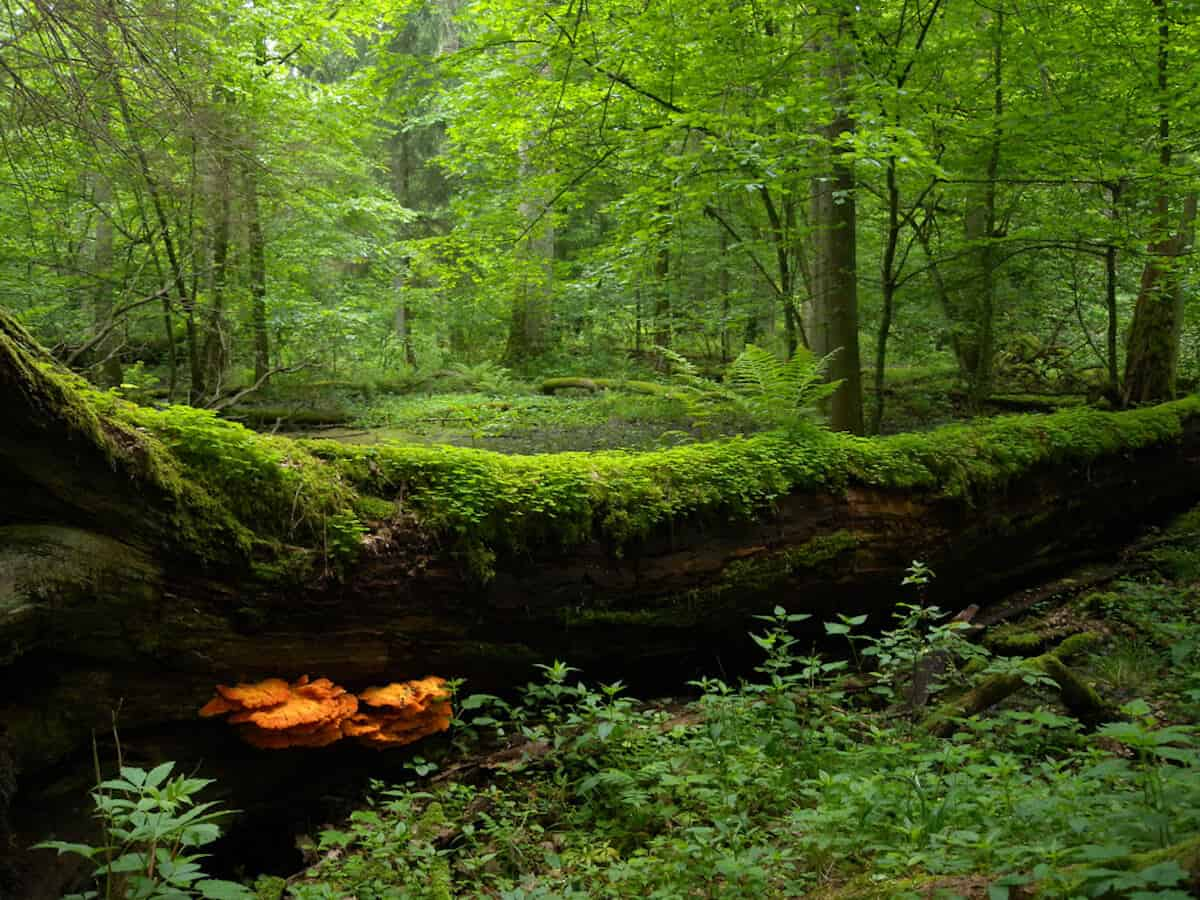 10 MOST BEAUTIFUL FORESTS: Bialowieza
