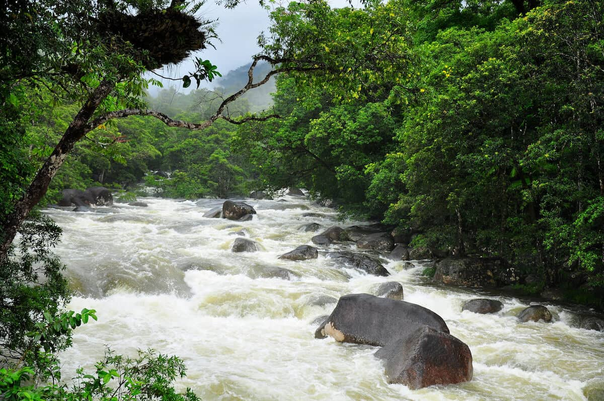 10 MOST BEAUTIFUL FORESTS: Daintree