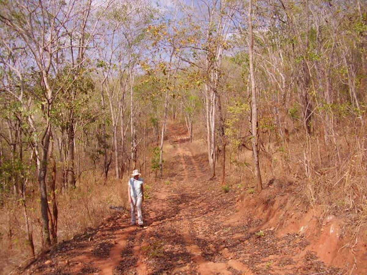 10 MOST BEAUTIFUL FORESTS: Miombo Woodland