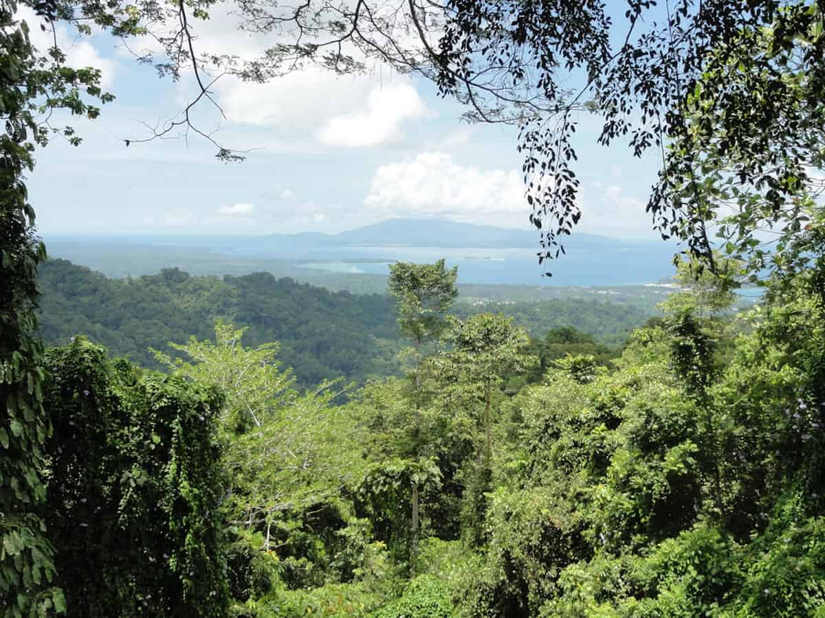 10 MOST BEAUTIFUL FORESTS: New Guinea