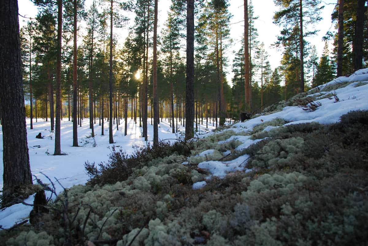 10 IMPORTANT FORESTS FOR YOUR WORLD TRAVEL BUCKET LIST
