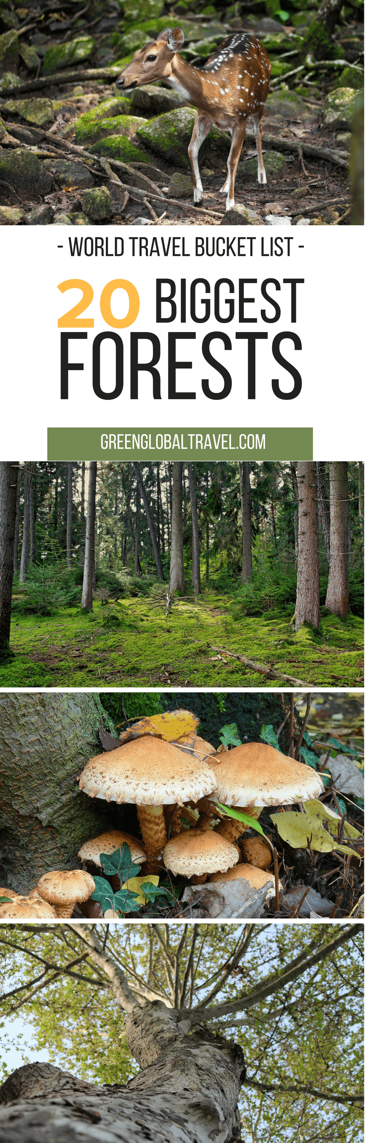 The 20 Biggest Forests (For Your World Travel Bucket List) including Forests in America, African Forests, Asian Forests, European Forests | American Forests via @greenglobaltrvl