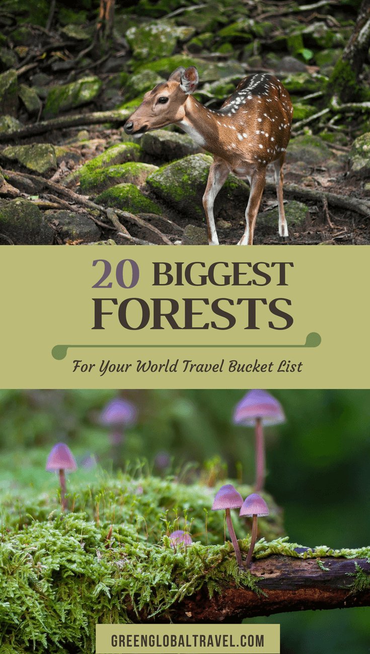 20 Biggest Forests in the World (For Your World Travel