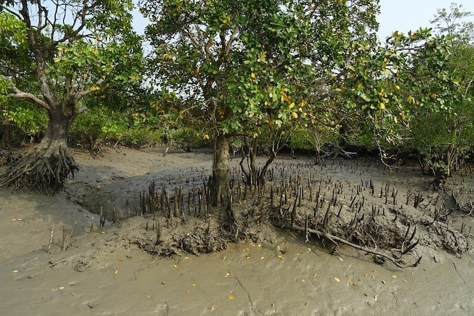 20 Biggest Forests - Sundarbans