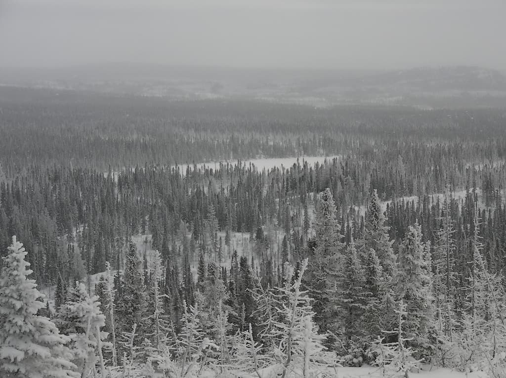 10 Most Beautiful Forests: Taiga