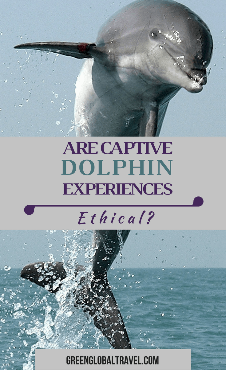 """Are Captive Dolphin Experiences Ethical? A look at the debate over captive cetacean facilities, and how to tell """"good"""" ones from """"bad"""" ones. via @greenglobaltrvll"""