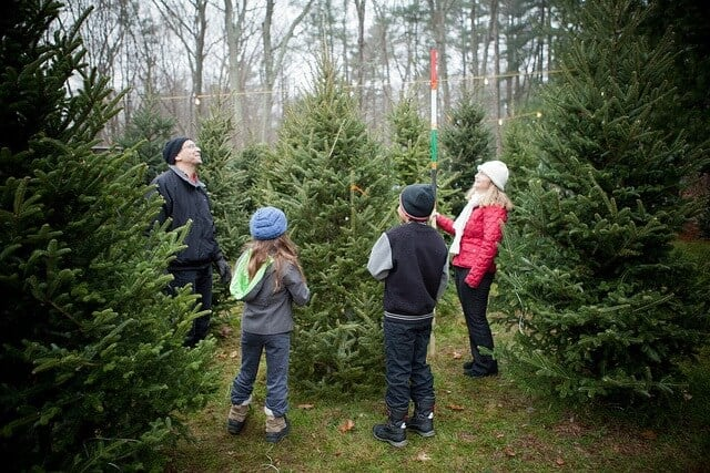 Choosing a Real Xmas at a Tree Farm