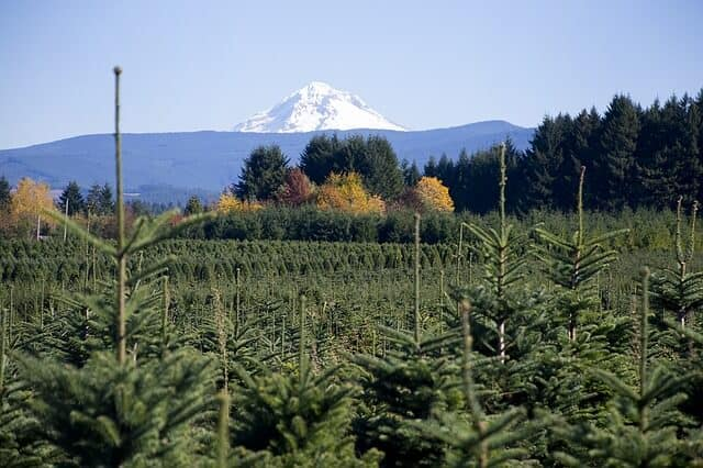 Live Christmas Tree Farm in Oregon