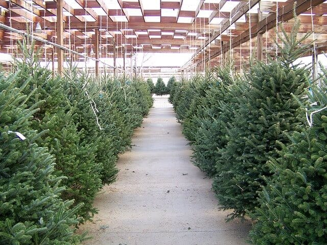 Real Xmas Tree Nursery