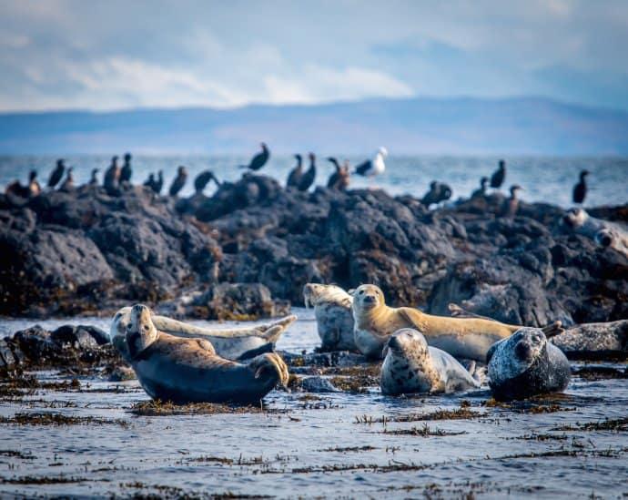 Things to do on the Isle of Skye, Scotland- Wildlife Watching Cruise