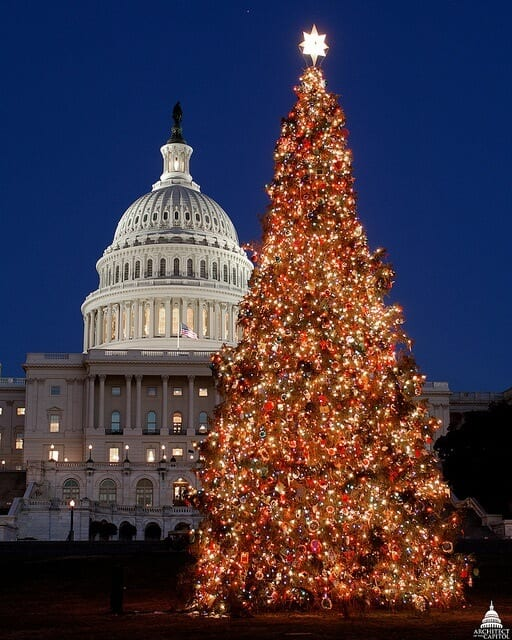 U.S. Capitol Real Xmas Tree