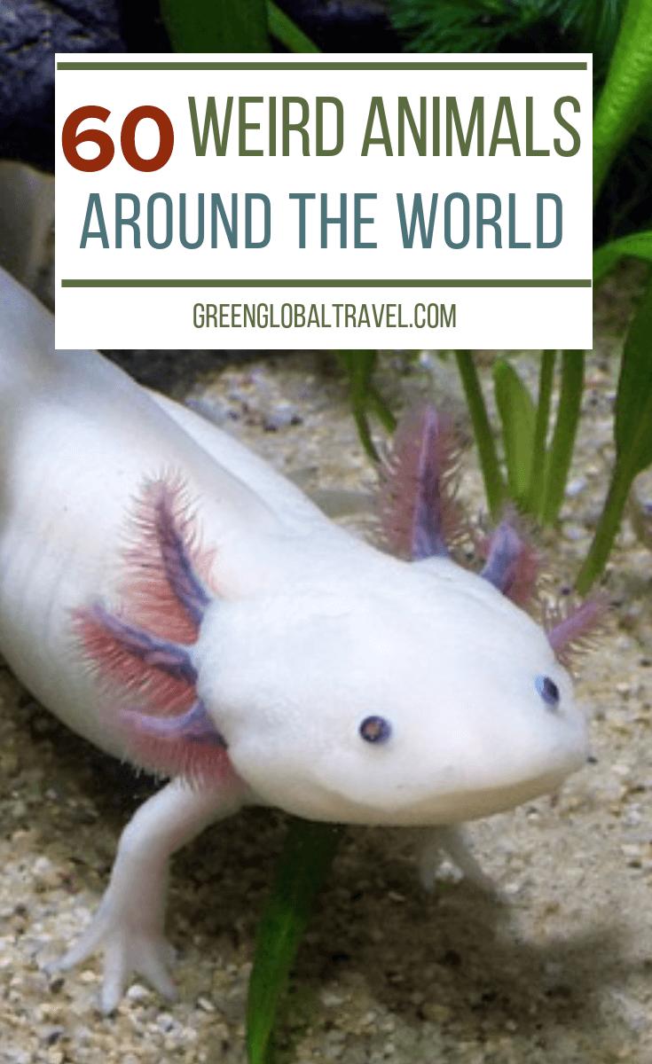 60 Weird Animals from Around the World