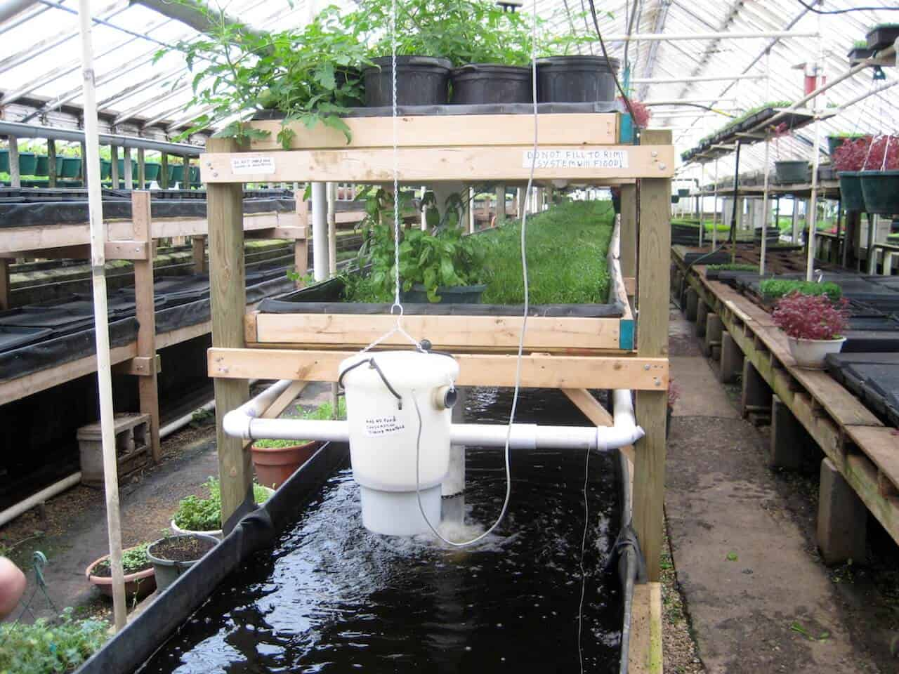 Aquaponics -The Ultimate DIY Beginner's Guide