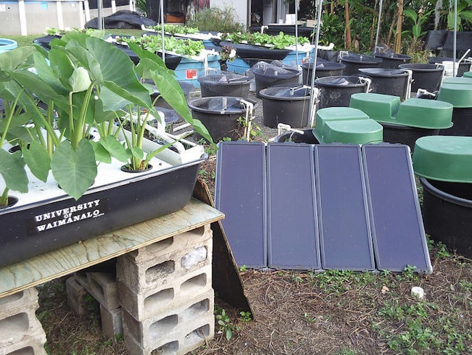 What is aquaponics the ultimate diy beginner 39 s guide for Aquaponics hawaii
