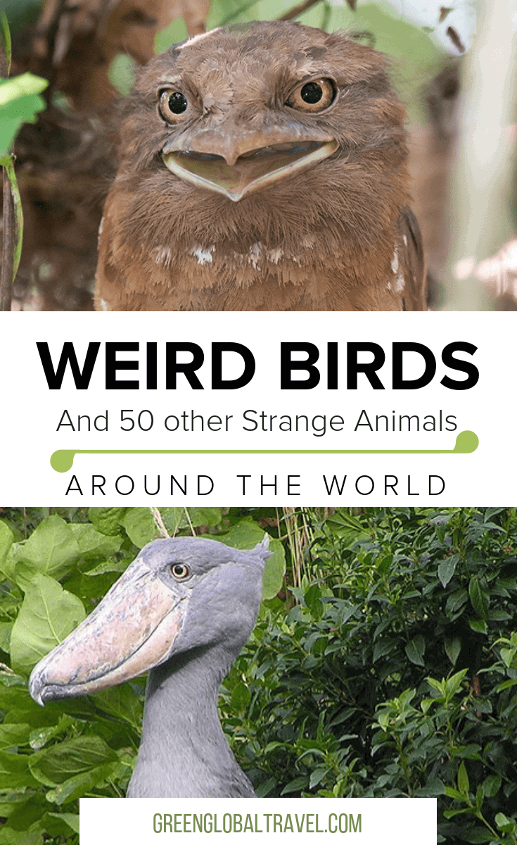 60 Weird Animals from Around the World